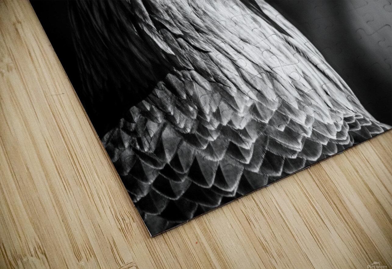 Eagle ap 2046 B&W HD Sublimation Metal print