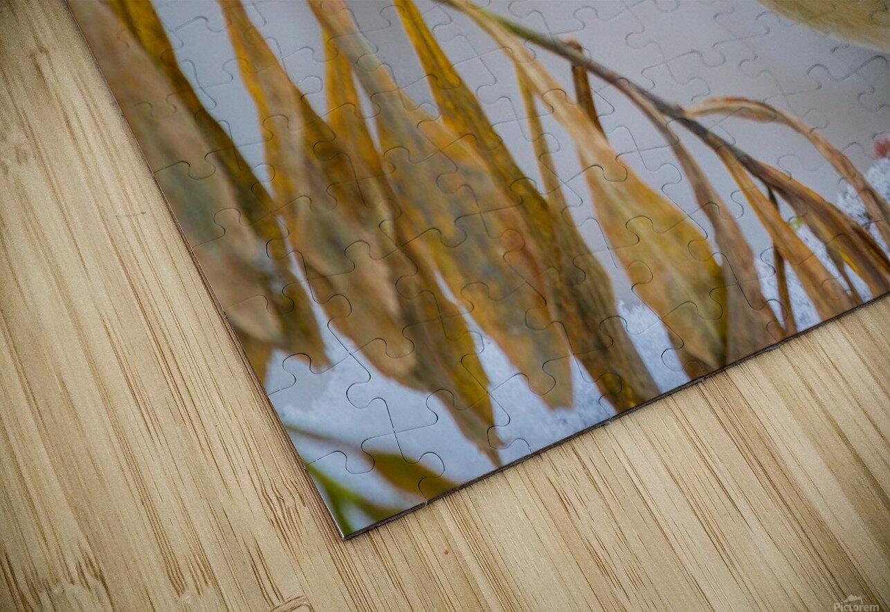 Goldfinch ap 1816 HD Sublimation Metal print