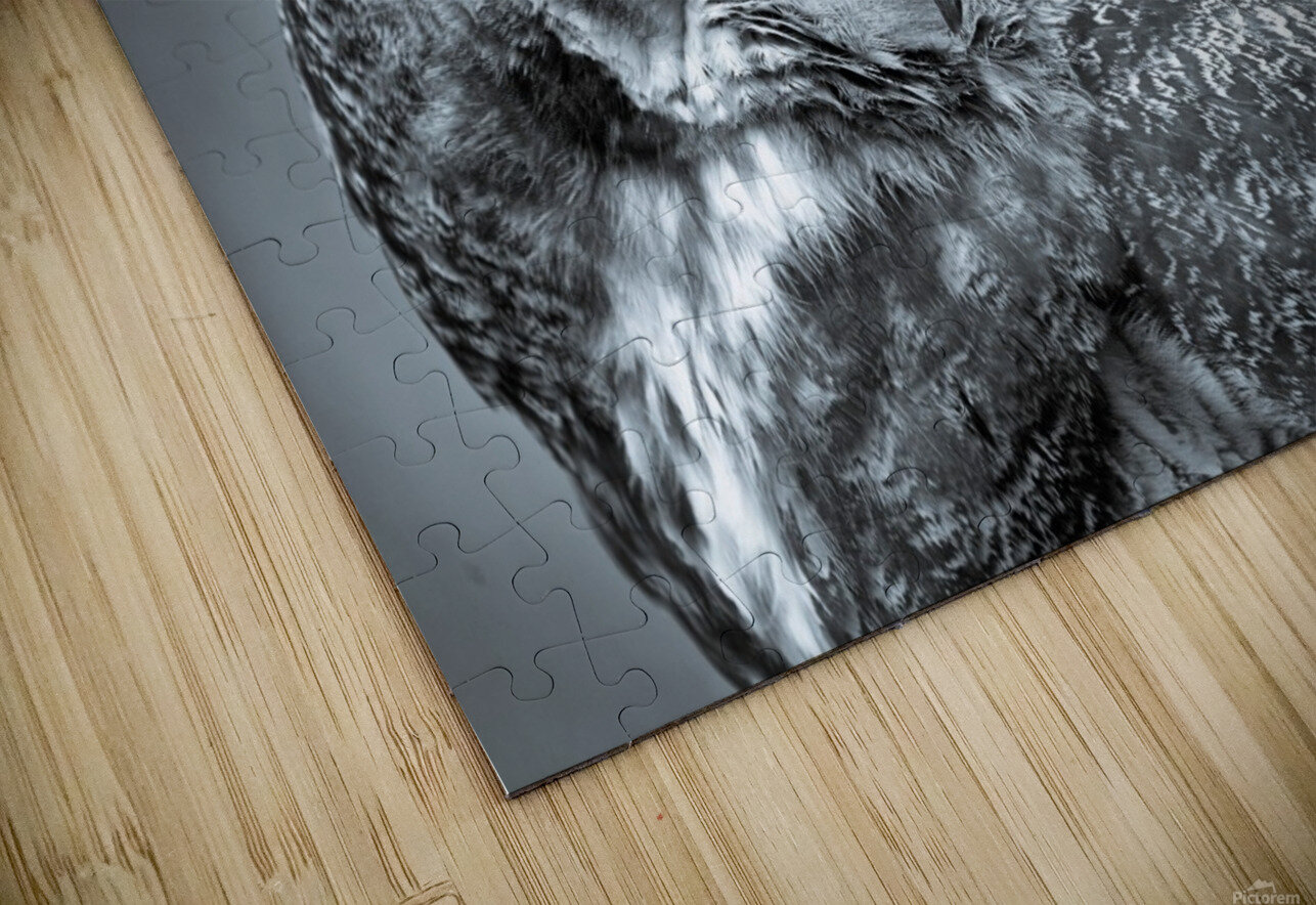 Great Horned Owl ap 2861 B&W HD Sublimation Metal print