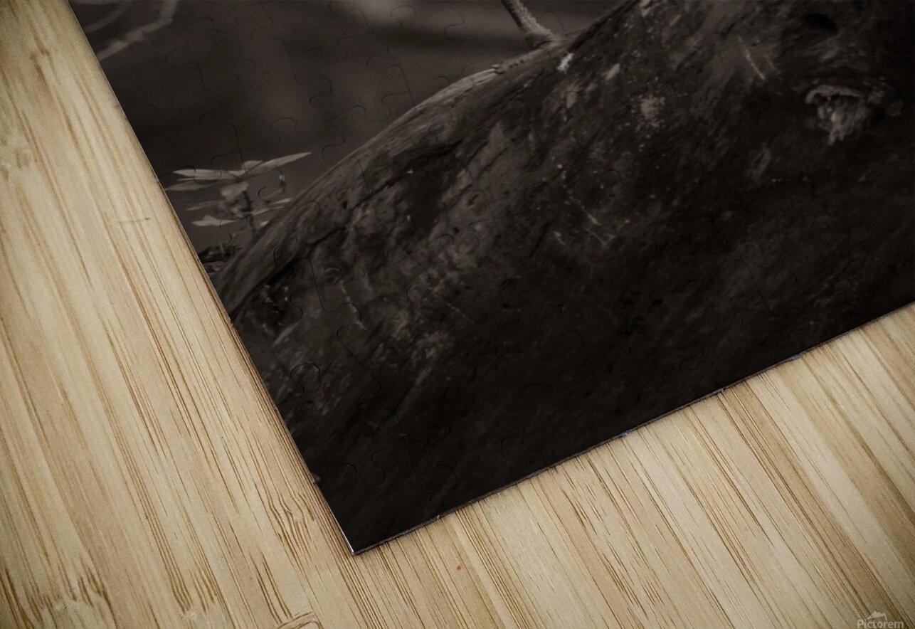 Great White Egret ap 1848 B&W Impression de sublimation métal HD