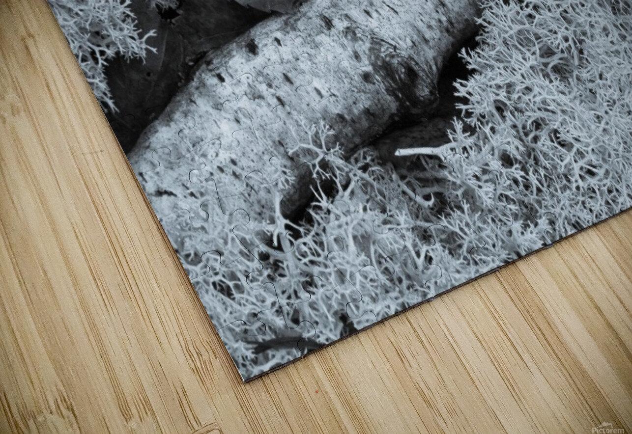 Maple Leaf ap 1554 B&W HD Sublimation Metal print
