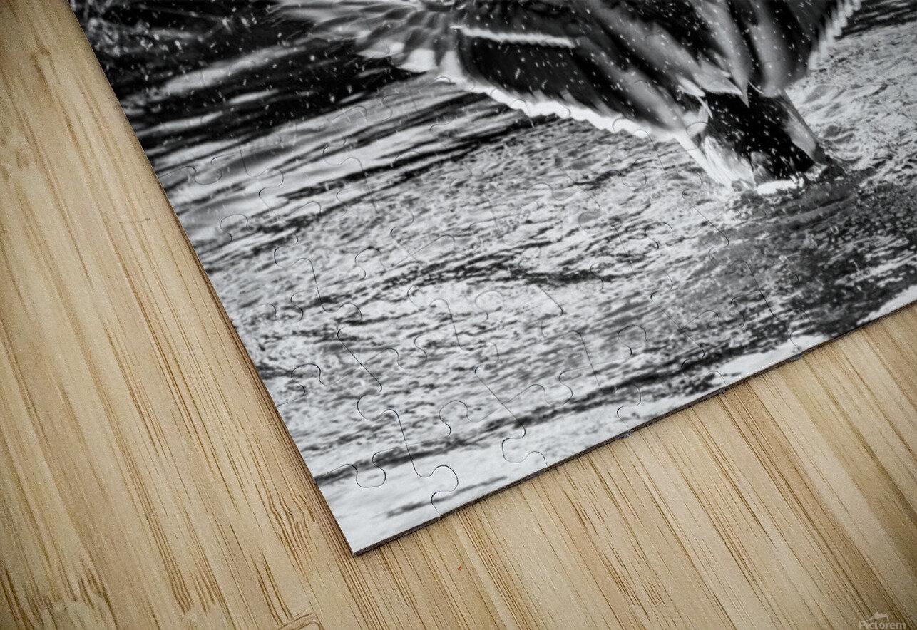 Mallard ap 1826 B&W HD Sublimation Metal print