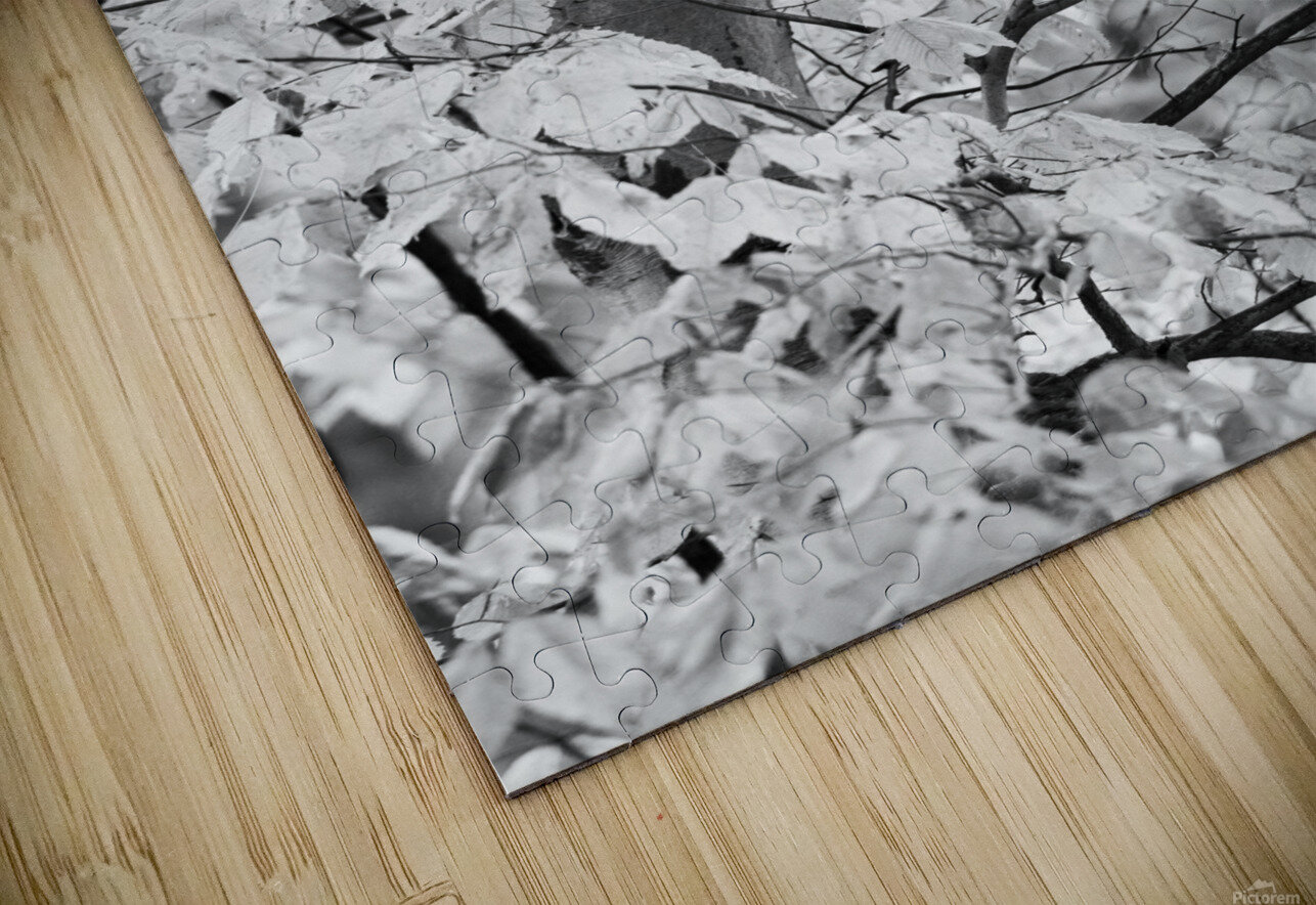 Beech Tree ap 1586 B&W HD Sublimation Metal print