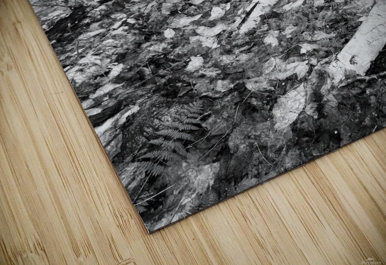 White Birch ap 2186 B&W HD Sublimation Metal print