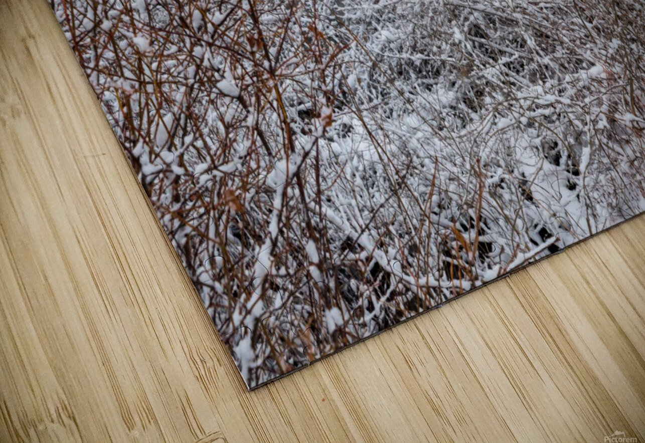 Winter ap 2708 HD Sublimation Metal print