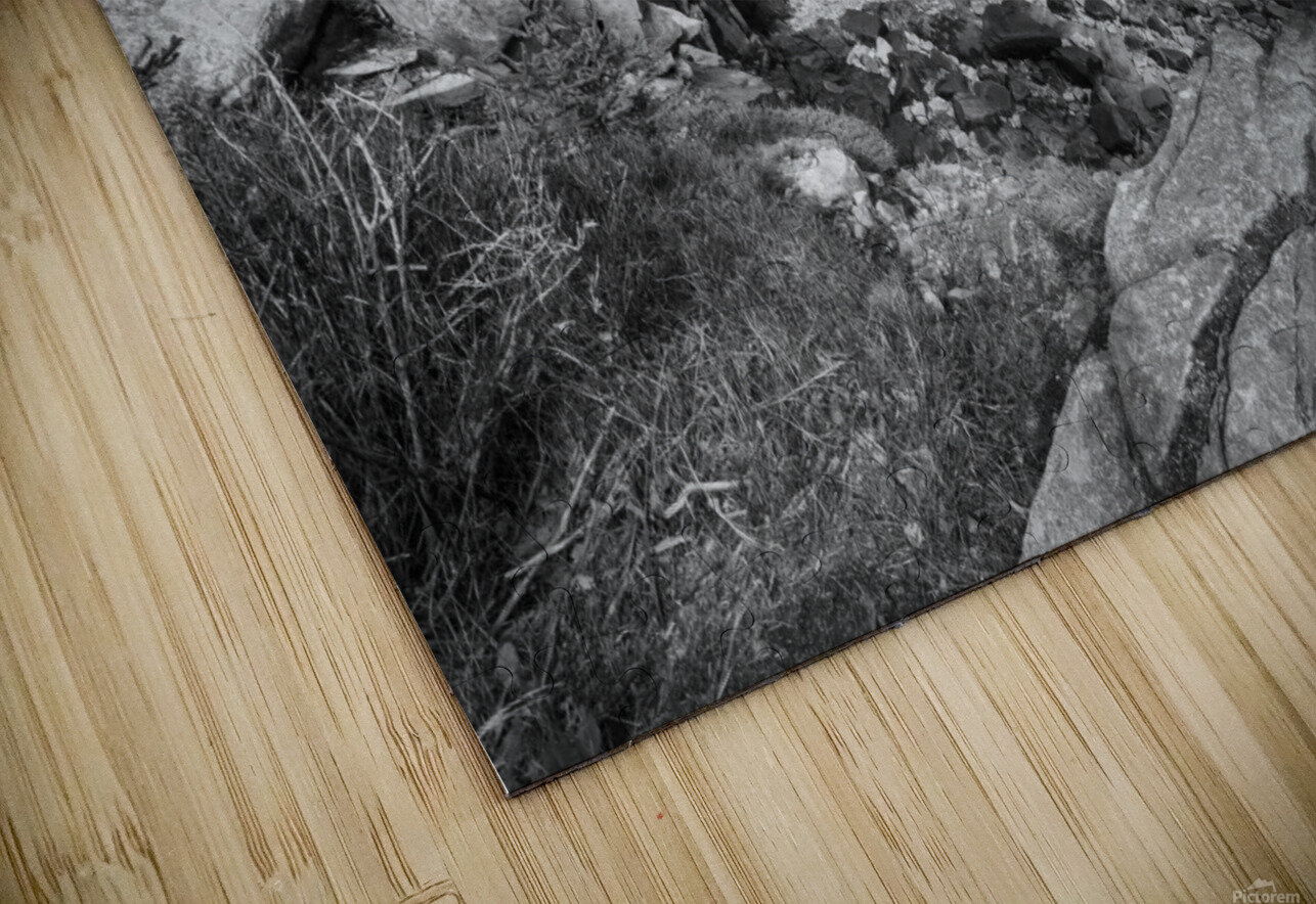 Acadia ap 2376 B&W HD Sublimation Metal print