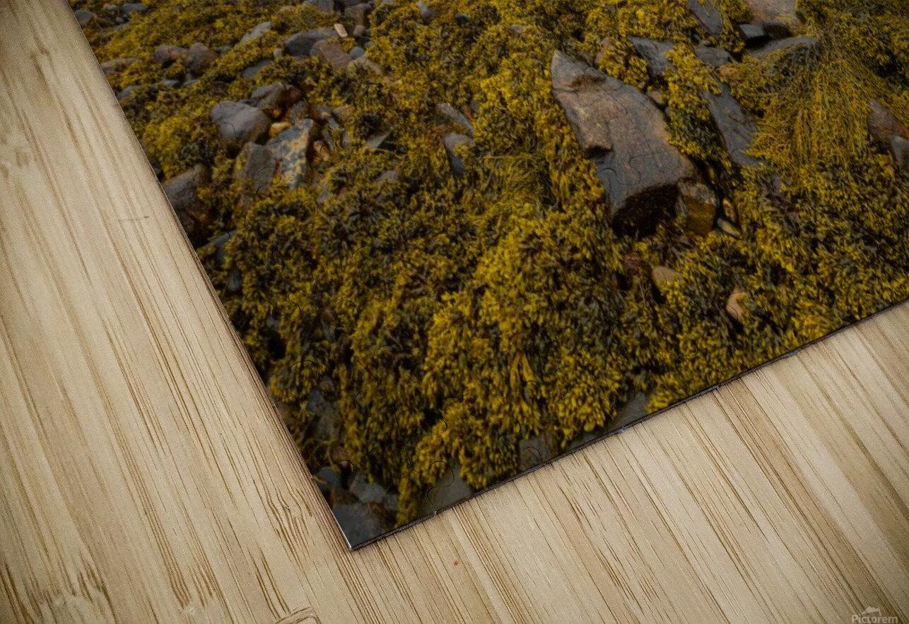 Low Tide ap 2271 HD Sublimation Metal print