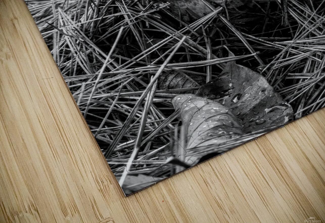 Mushrooms ap 1558 B&W HD Sublimation Metal print
