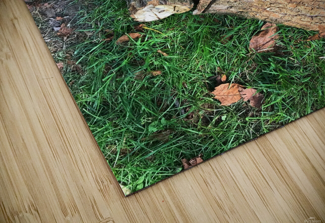 wood for fire HD Sublimation Metal print