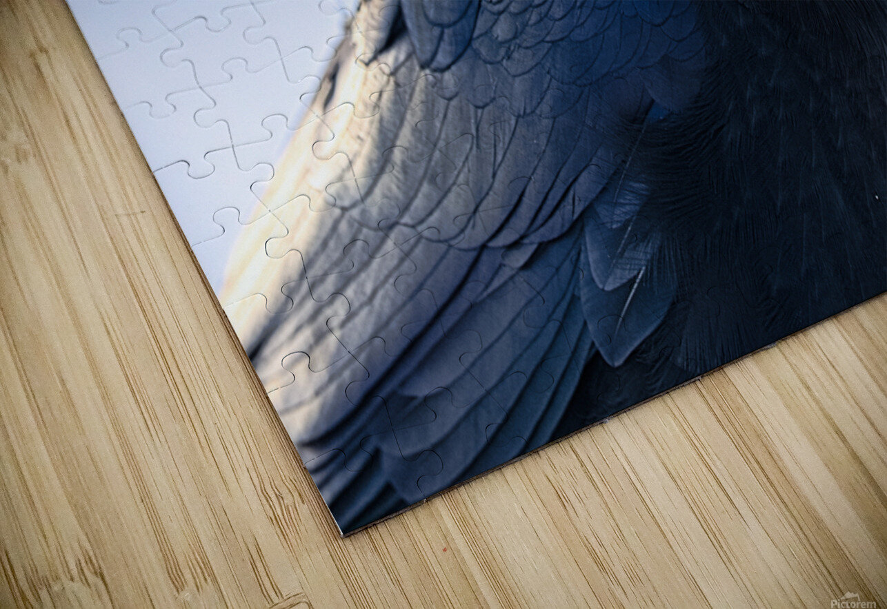 Raven HD Sublimation Metal print