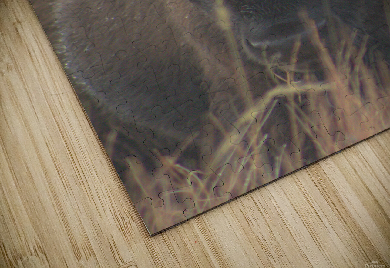 Wet Hair Dont Care HD Sublimation Metal print