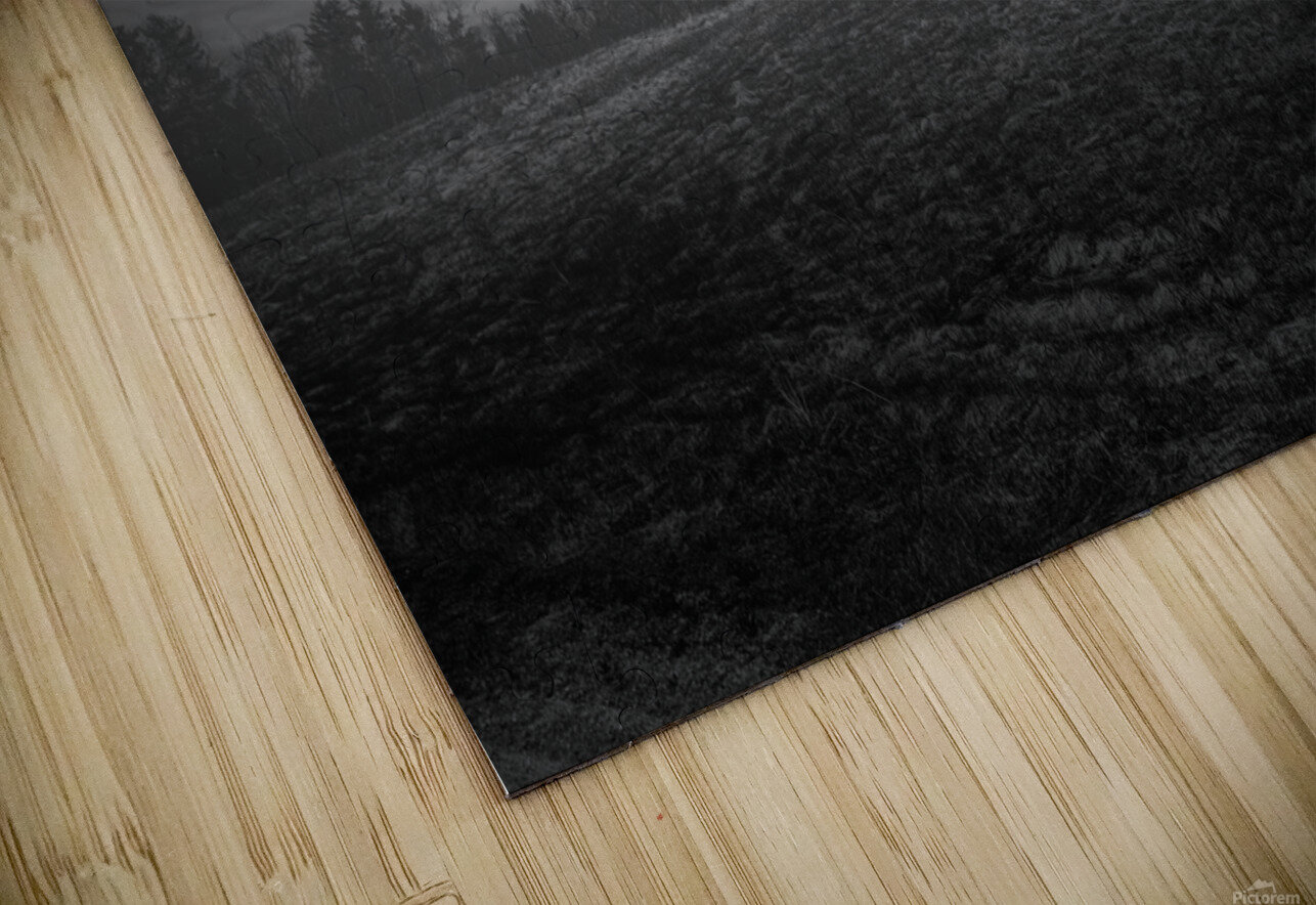 Misty Morning HD Sublimation Metal print