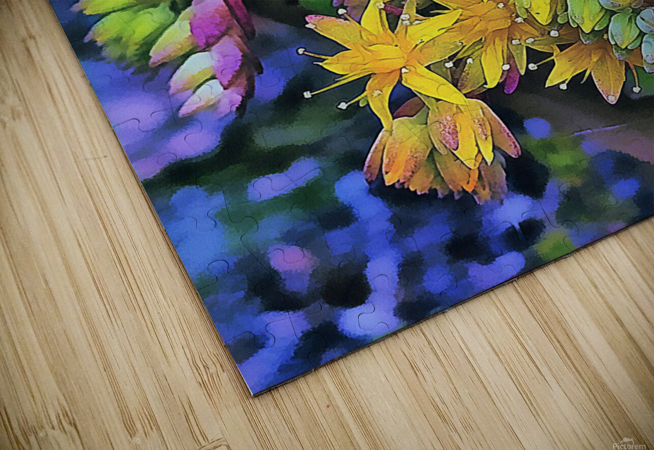 Echeveria Hybrid With Yellow Flowers HD Sublimation Metal print