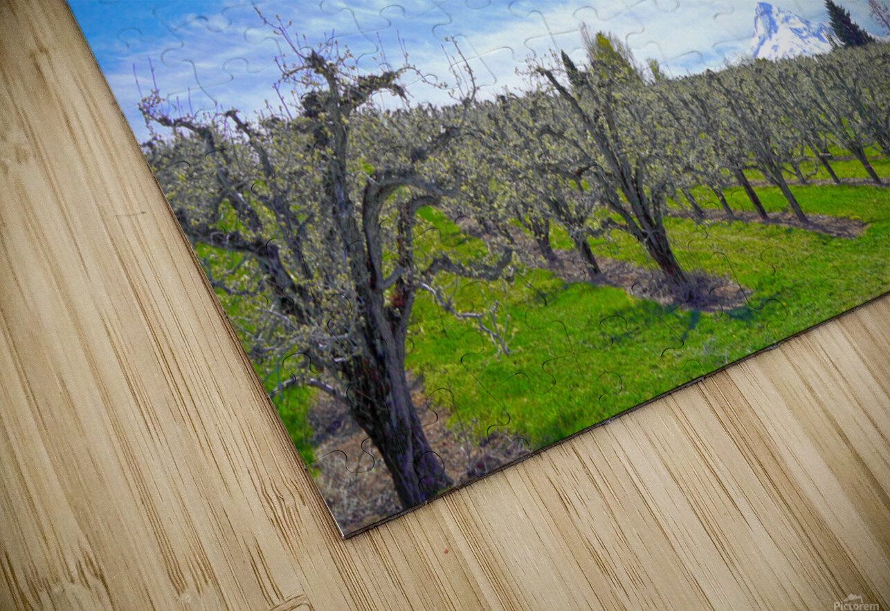 Spring in the Orchard Hood River Valley Oregon HD Sublimation Metal print
