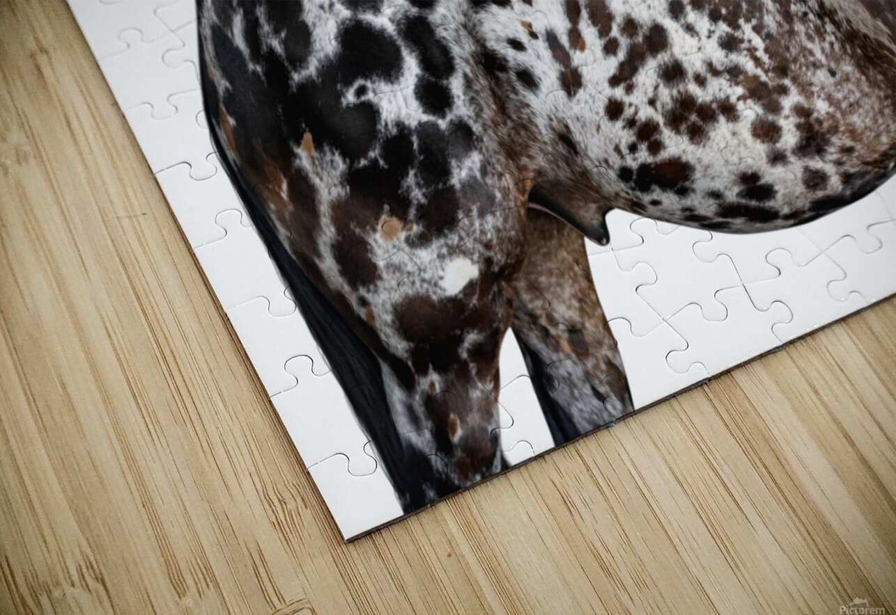 Spotted Horse Portrait HD Sublimation Metal print