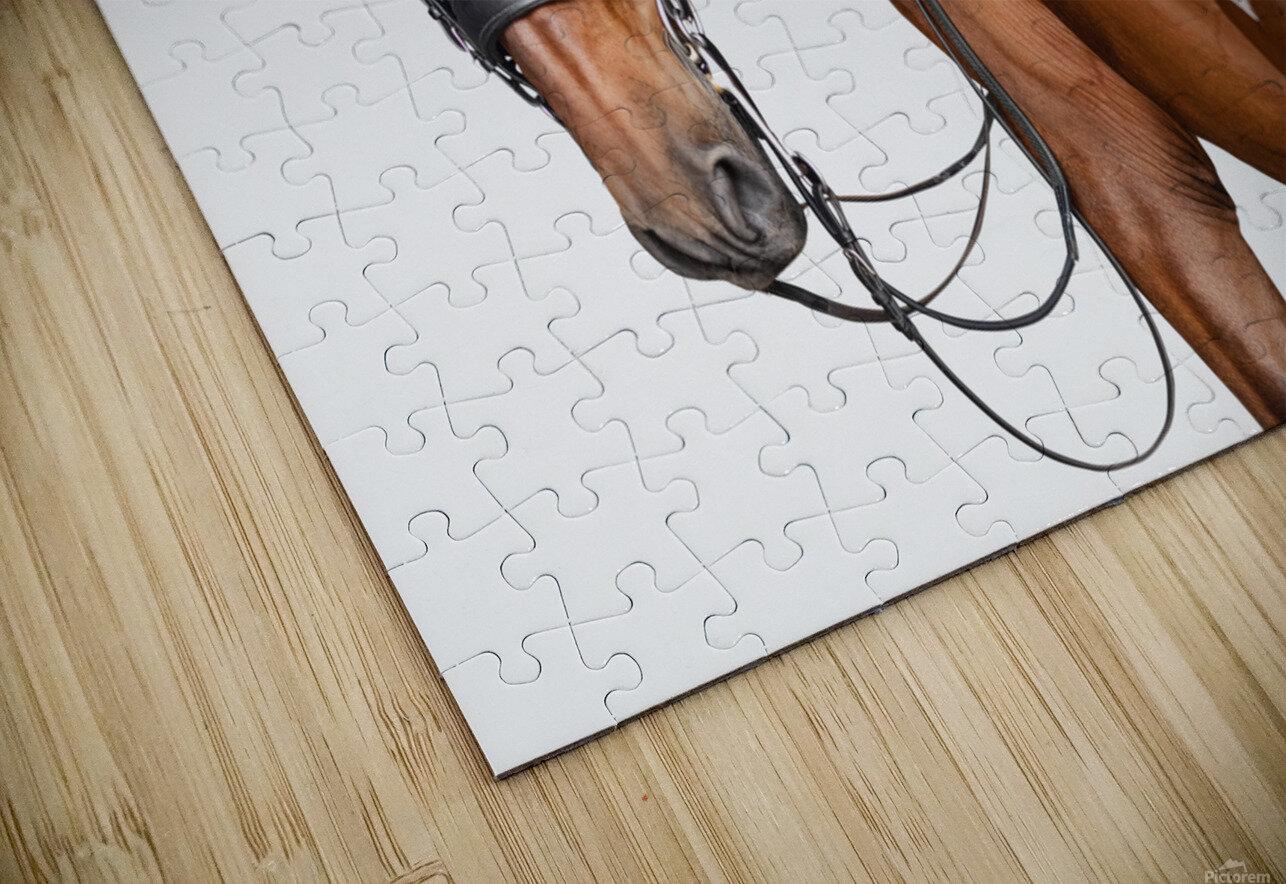 Bay Horse Portrait HD Sublimation Metal print