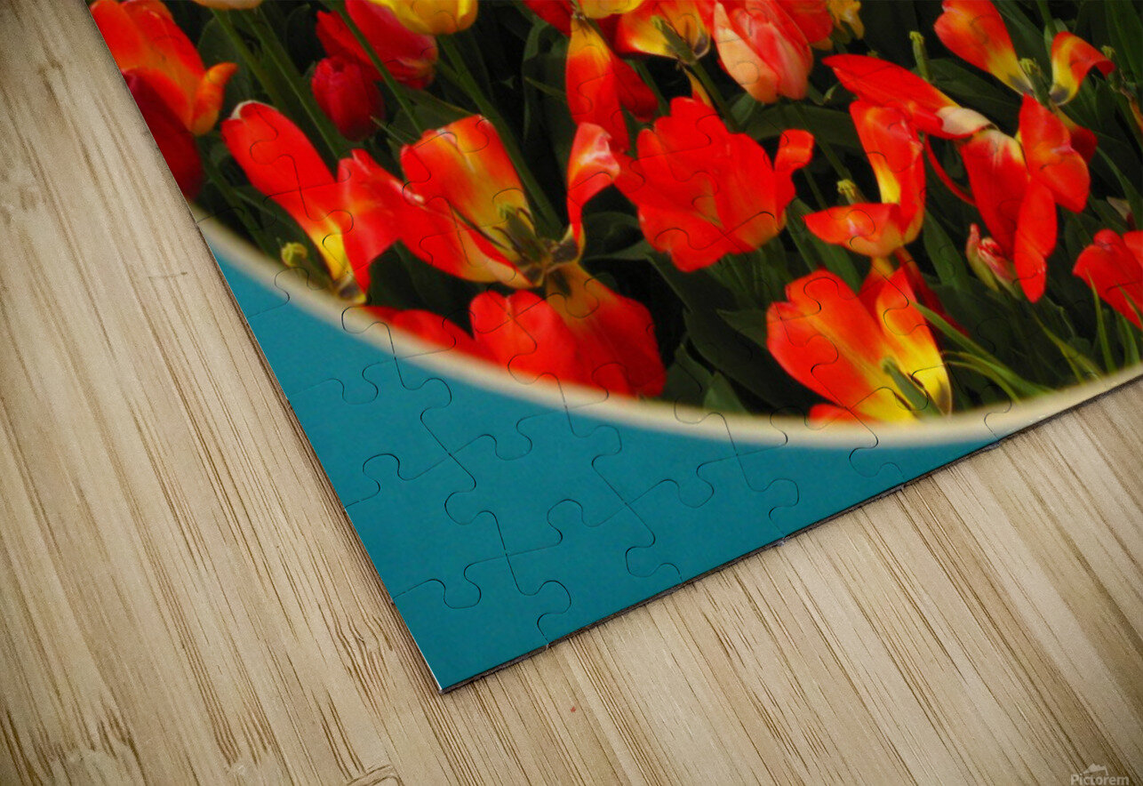 Parade of Tulips HD Sublimation Metal print