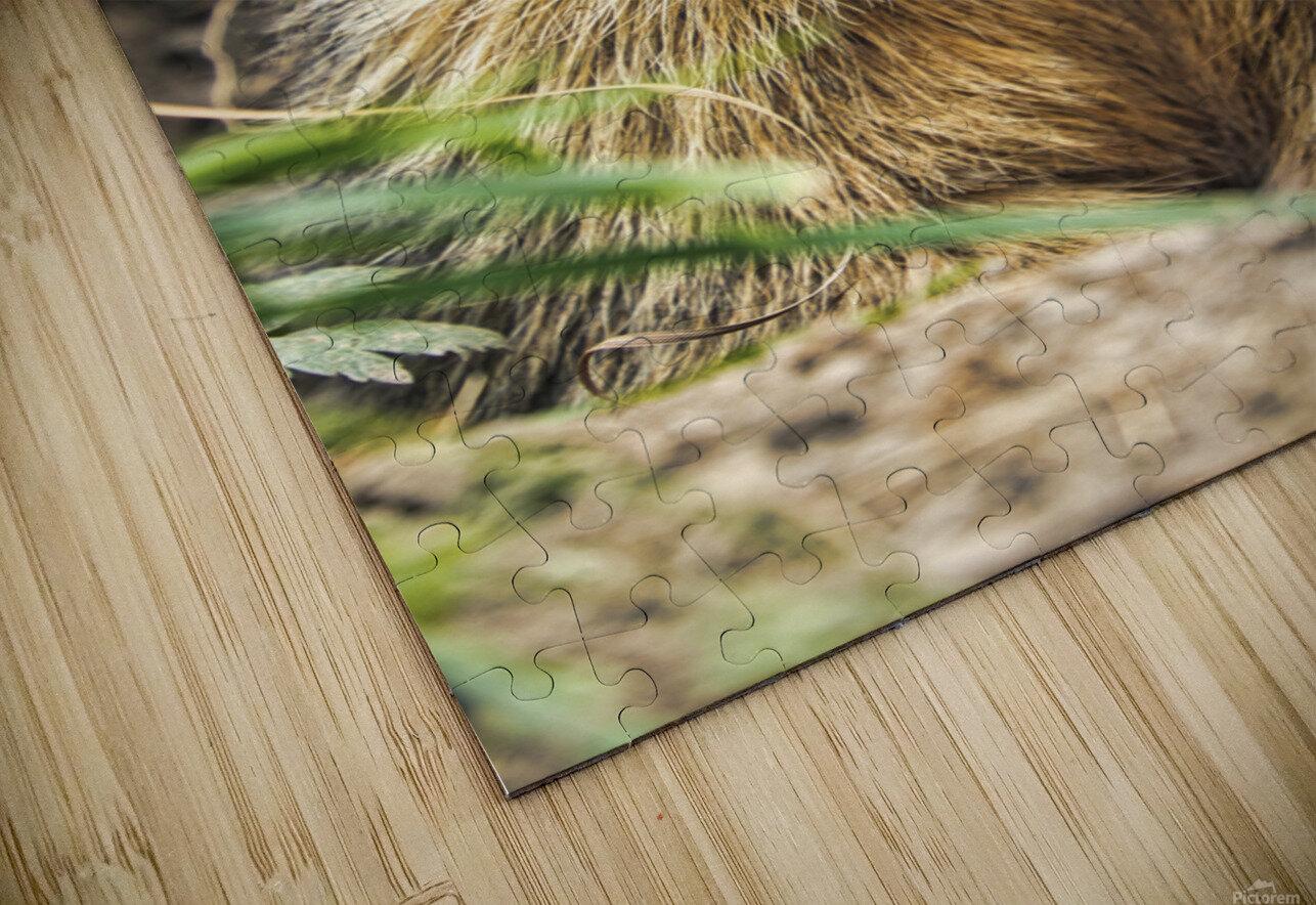 Alpine Marmot HD Sublimation Metal print