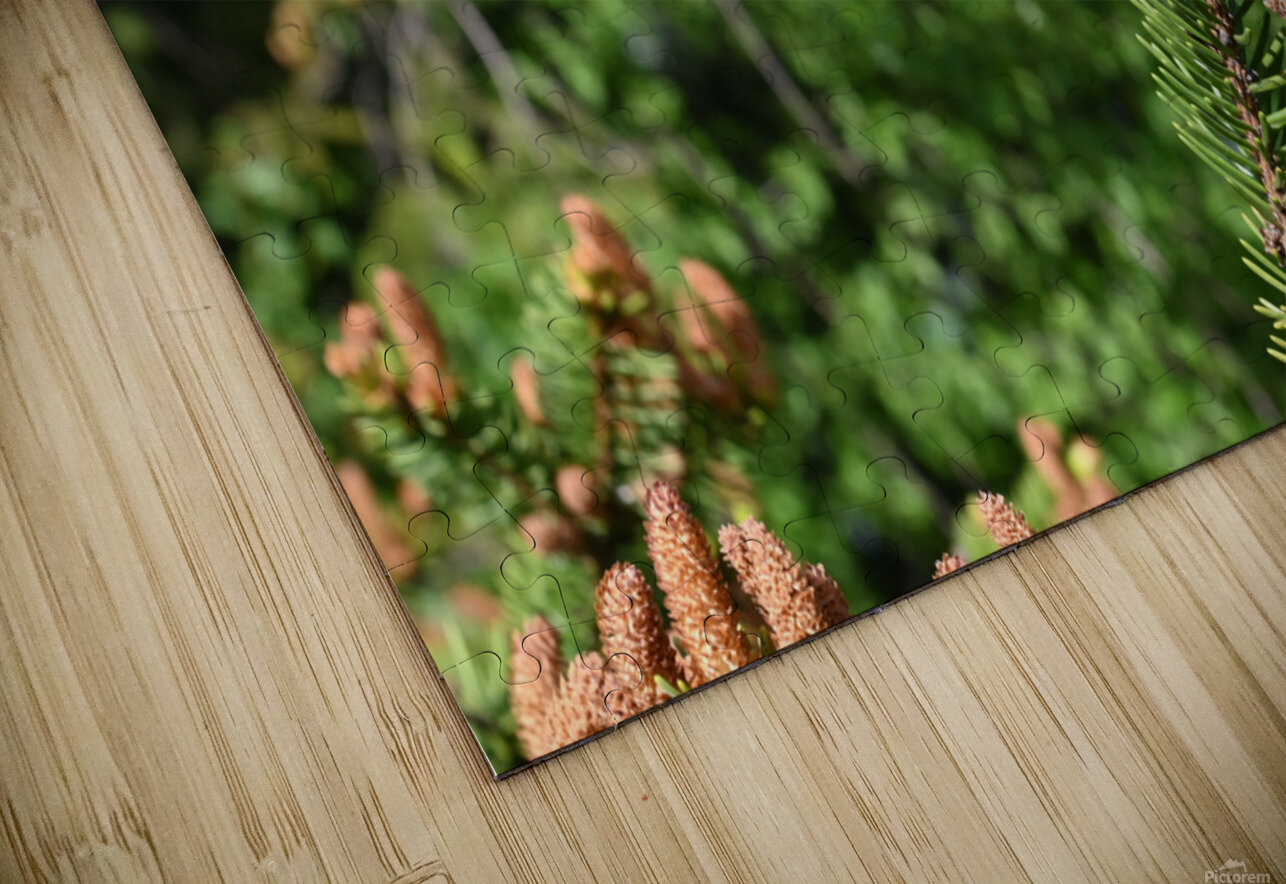 Spruce twig and background HD Sublimation Metal print