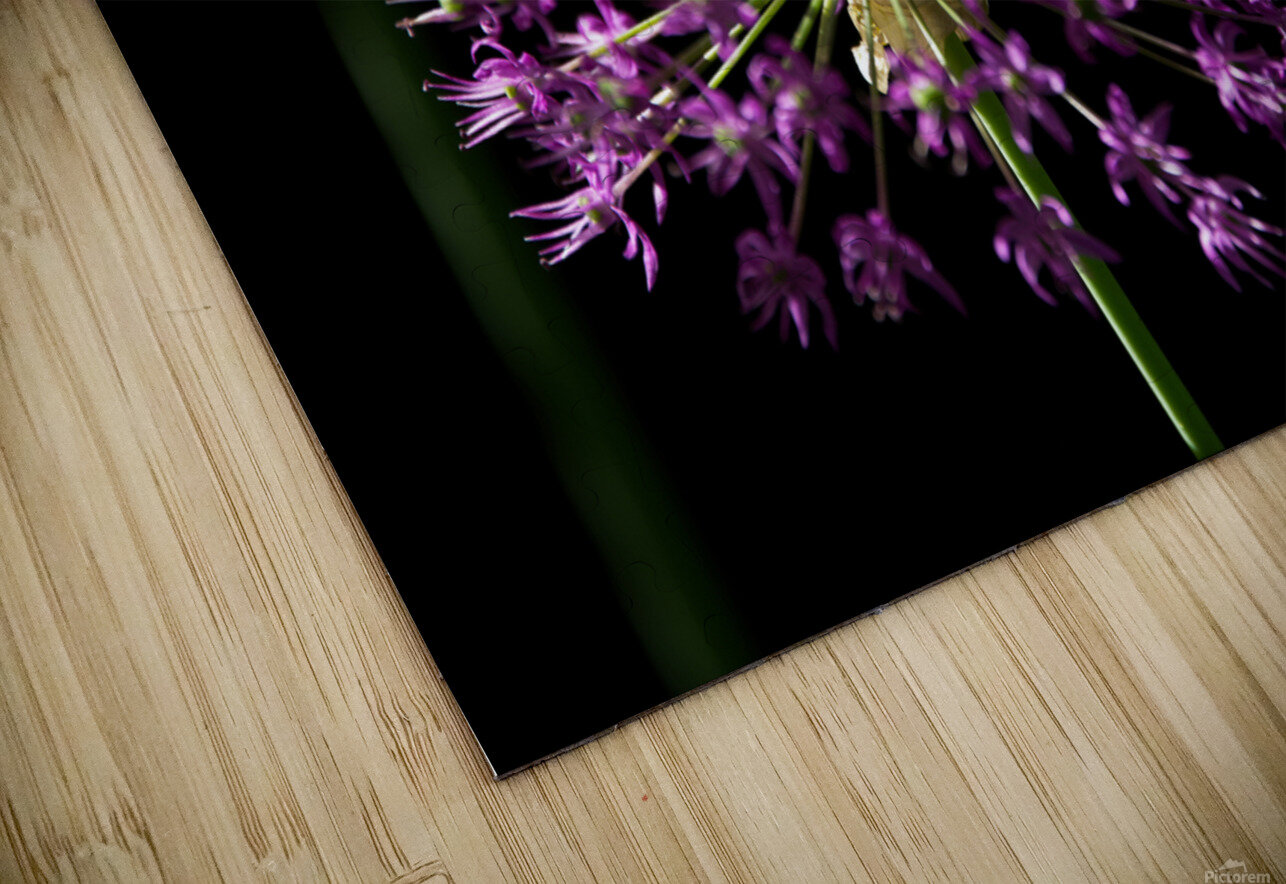 Purple Allium HD Sublimation Metal print