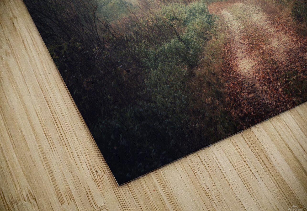 Foggy autumn forest HD Sublimation Metal print