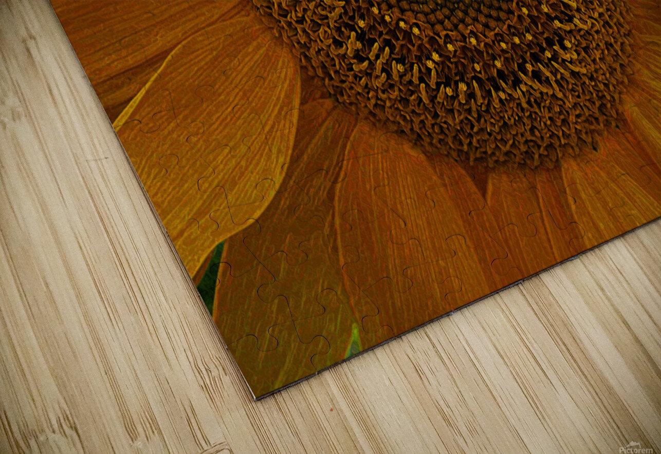 Enhanced Sunflower HD Sublimation Metal print