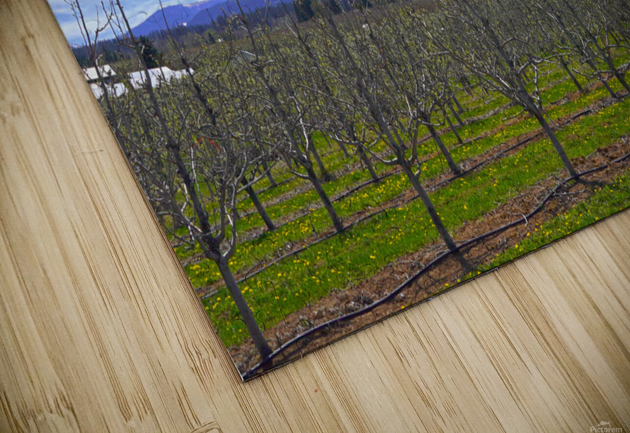 Spring at the Orchards  - Mount Hood - Oregon HD Sublimation Metal print