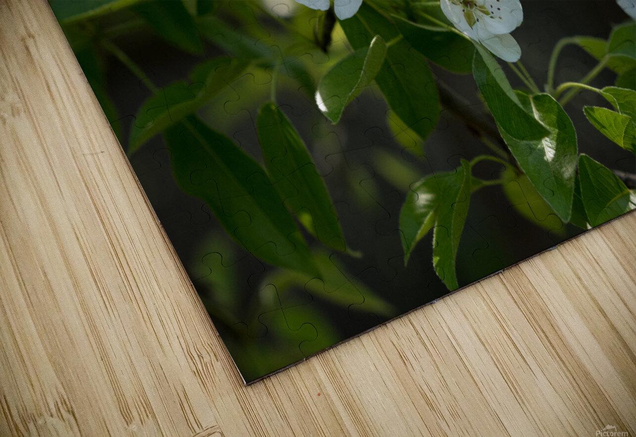 Poirier en fleurs 1  Impression de sublimation métal HD