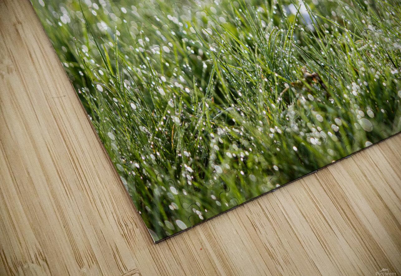 Confettis au jardin 1 HD Sublimation Metal print