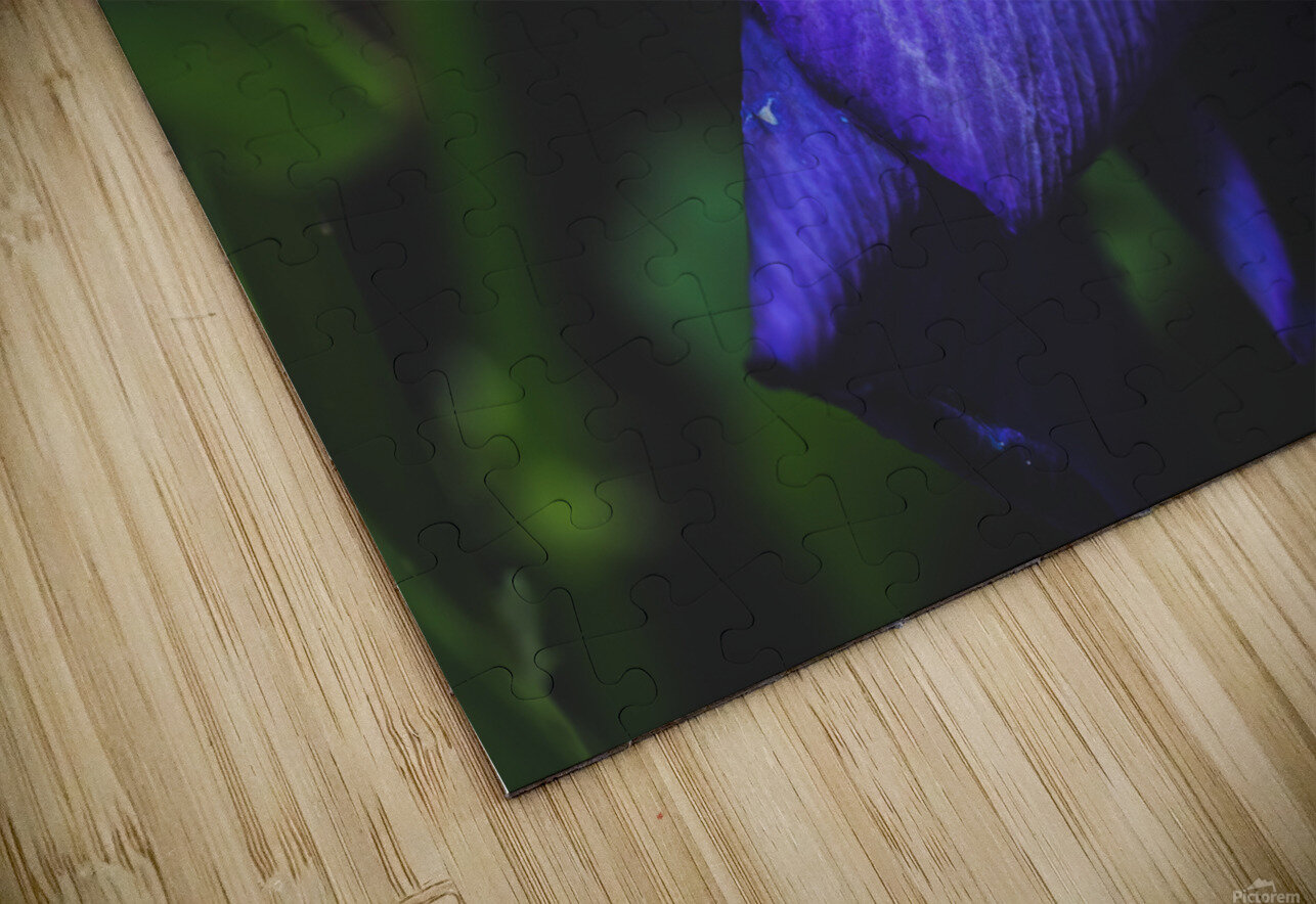 Drops With Blue HD Sublimation Metal print