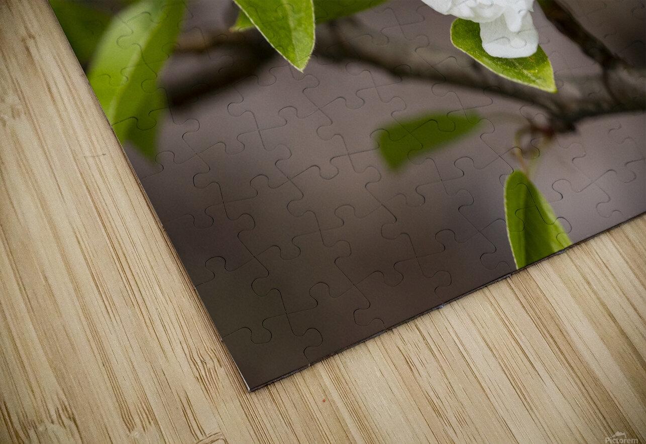 Poirier en fleurs 2 HD Sublimation Metal print