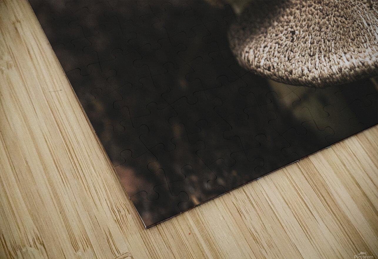 Petit couple au sous bois - Little couple in the underwoods HD Sublimation Metal print