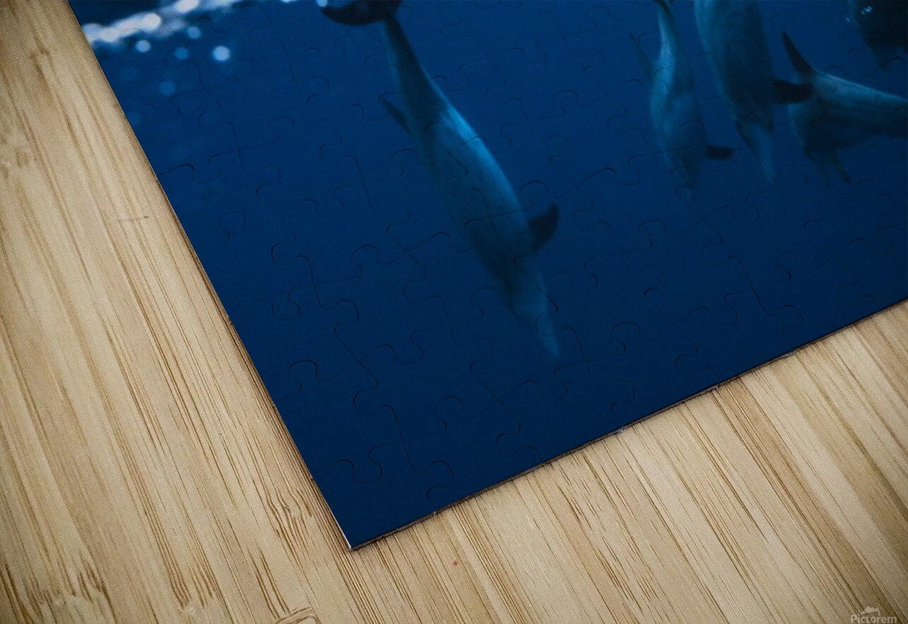 Between air and water with the dolphins HD Sublimation Metal print