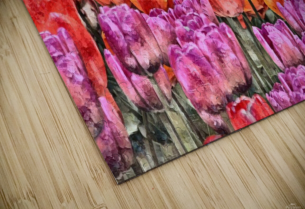 Tulips at Roozengaarde HD Sublimation Metal print
