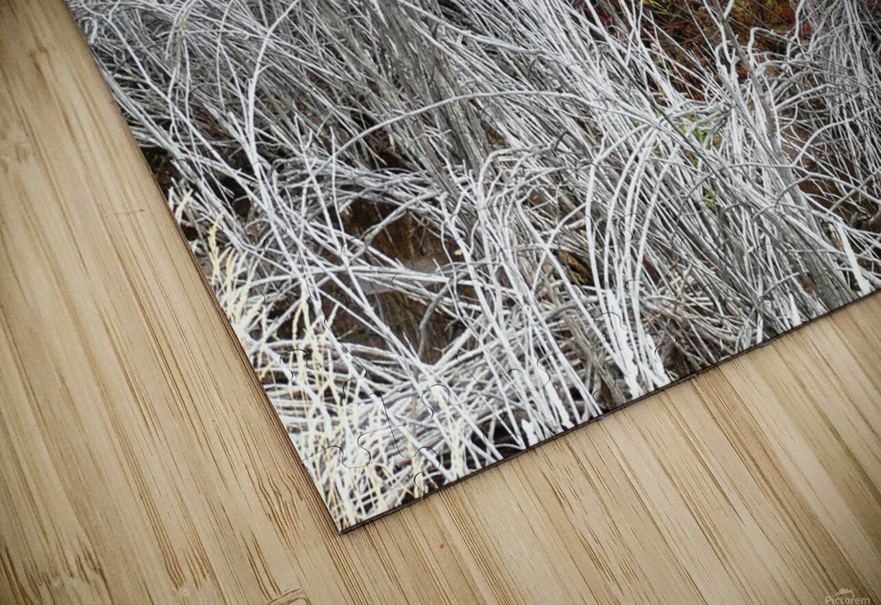 Willows HD Sublimation Metal print