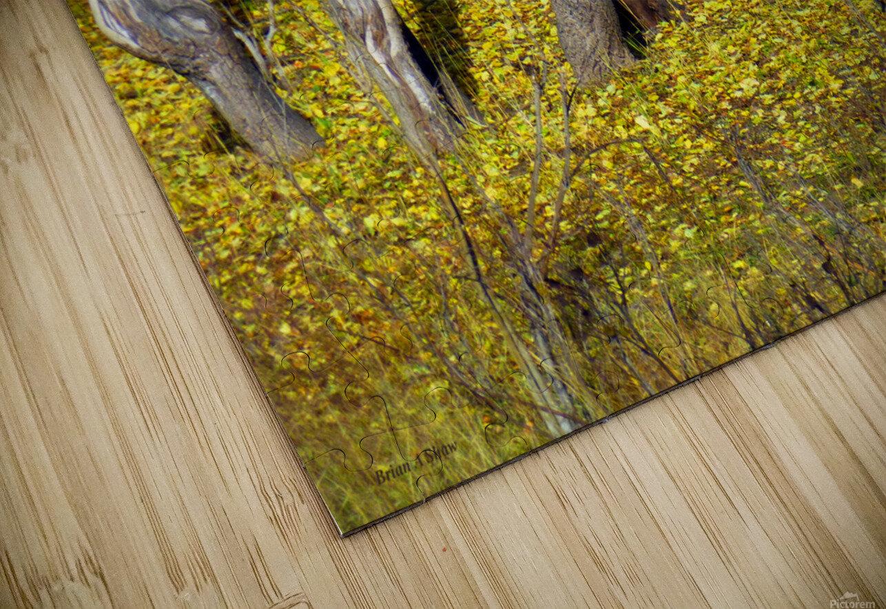 Baby Deer in Old Aspen Trees HD Sublimation Metal print