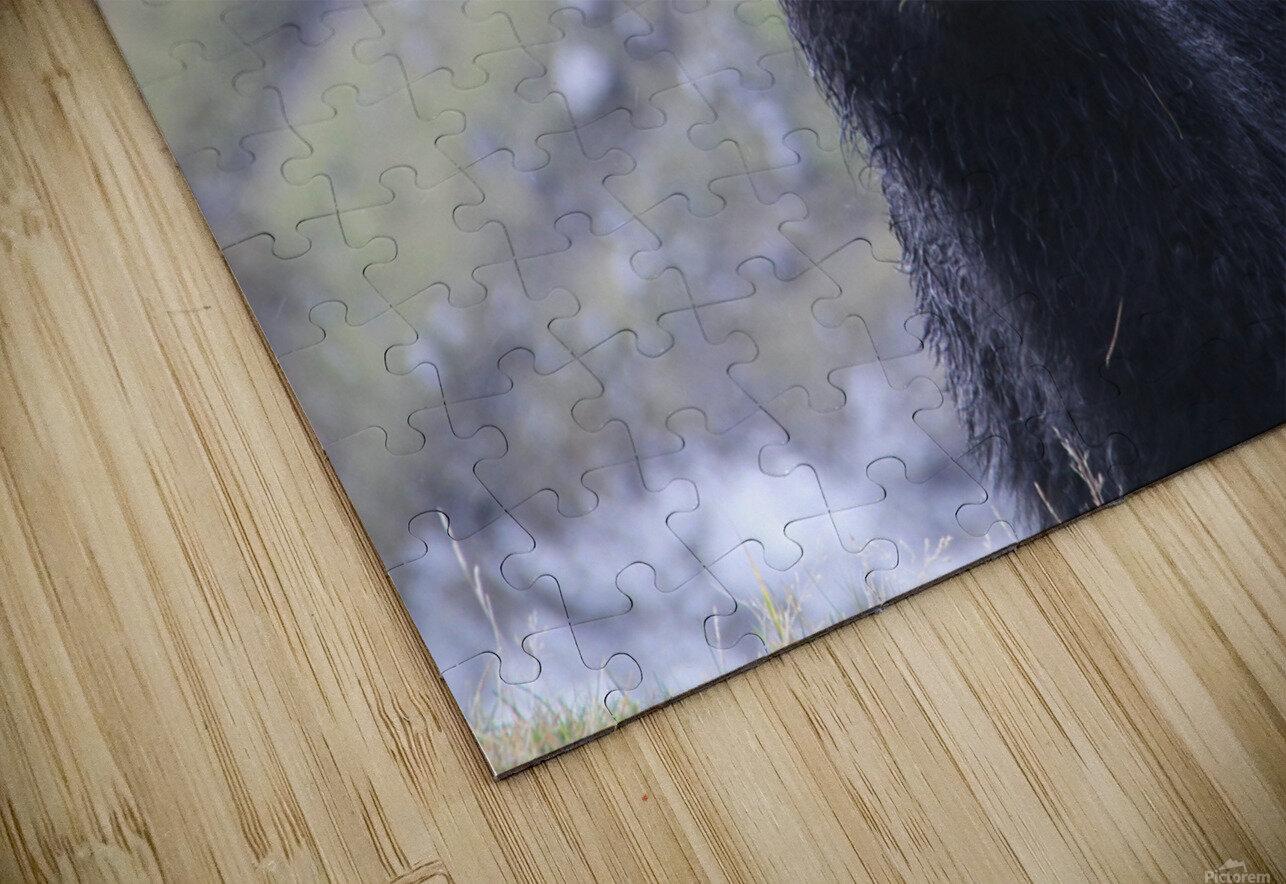 sheep HD Sublimation Metal print