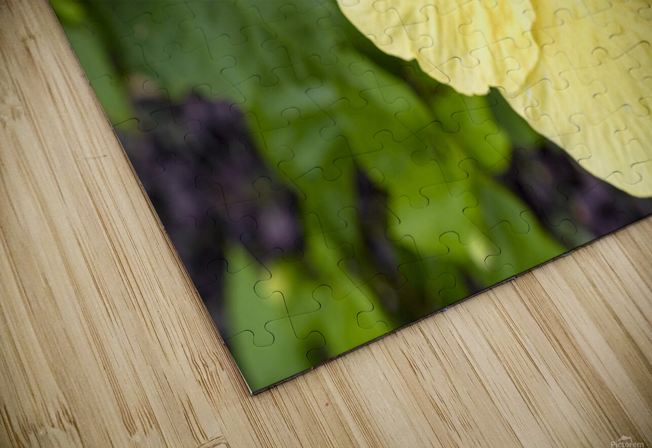 Yellow Hibiscus Tropical Flower Hawaii HD Sublimation Metal print