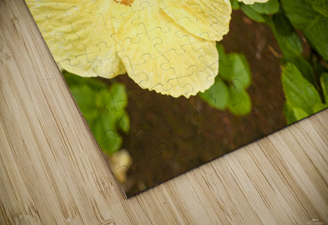 Hibiscus Trio   Tropical Flowers Hawaii HD Sublimation Metal print
