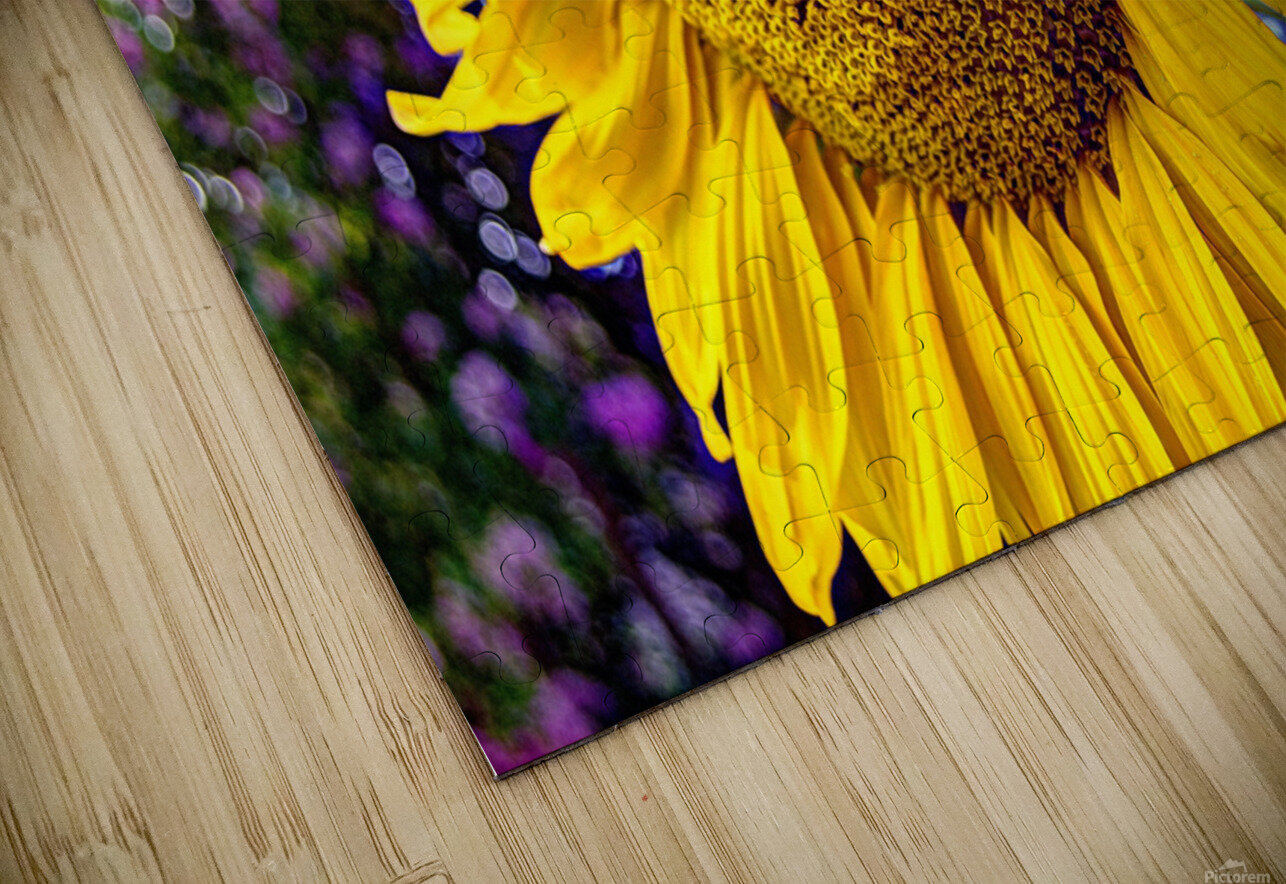 Sunflower Creative HD Sublimation Metal print