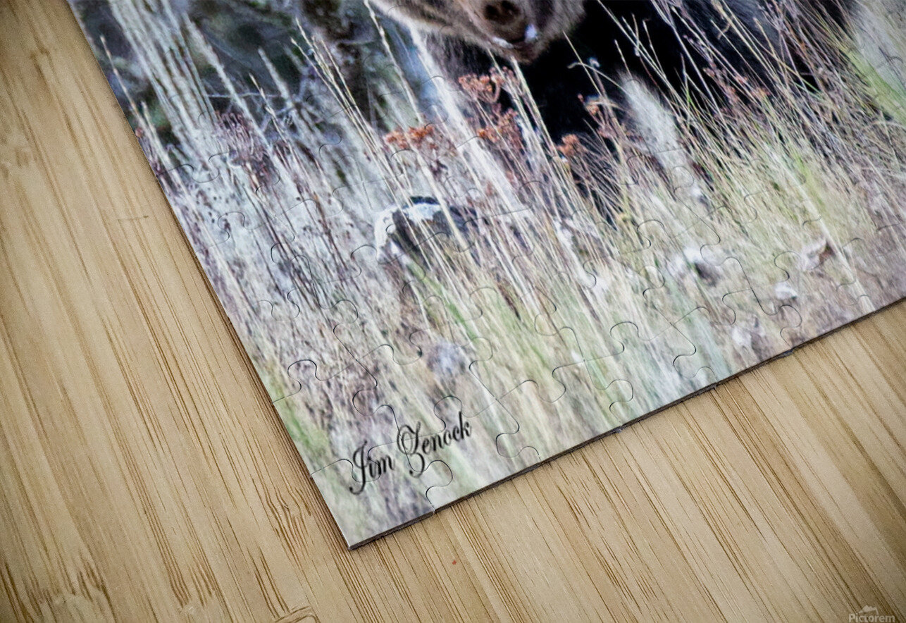 Grizzly Bear HD Sublimation Metal print