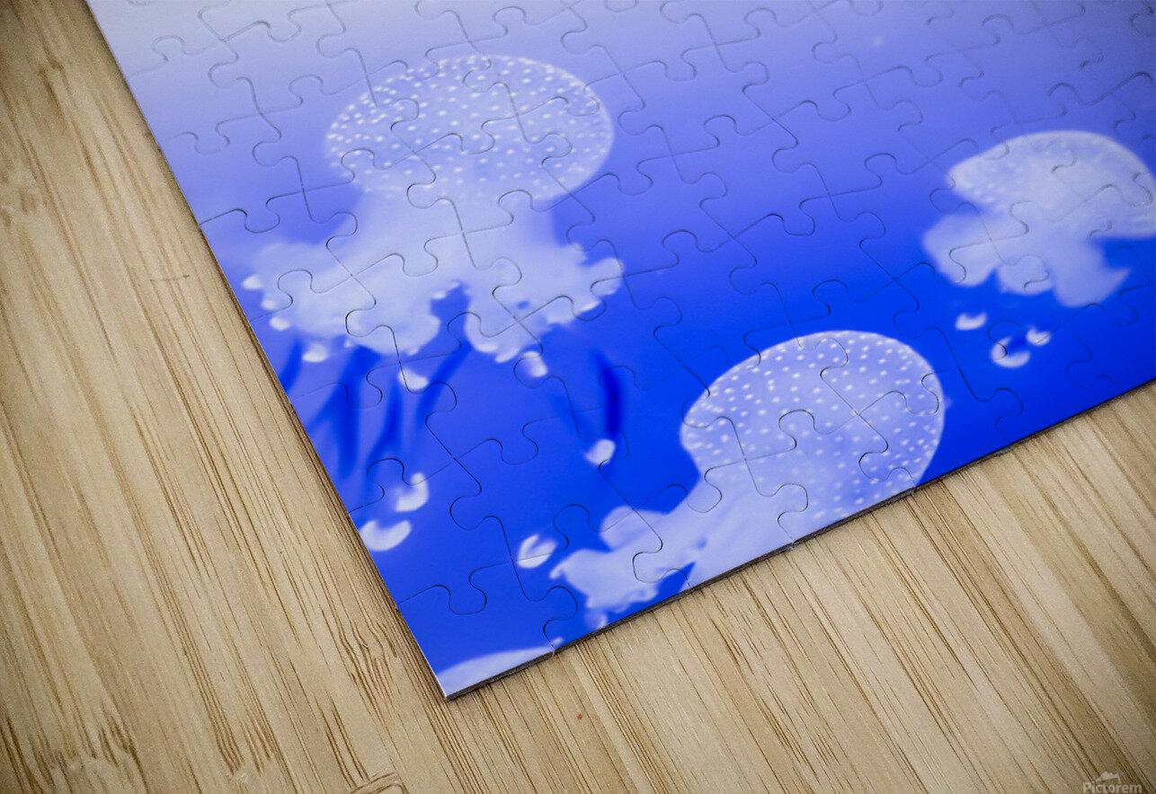 Jellyfish HD Sublimation Metal print