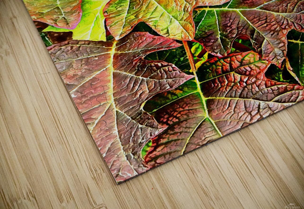 Oak Leaved Hydrangea In Autumn HD Sublimation Metal print