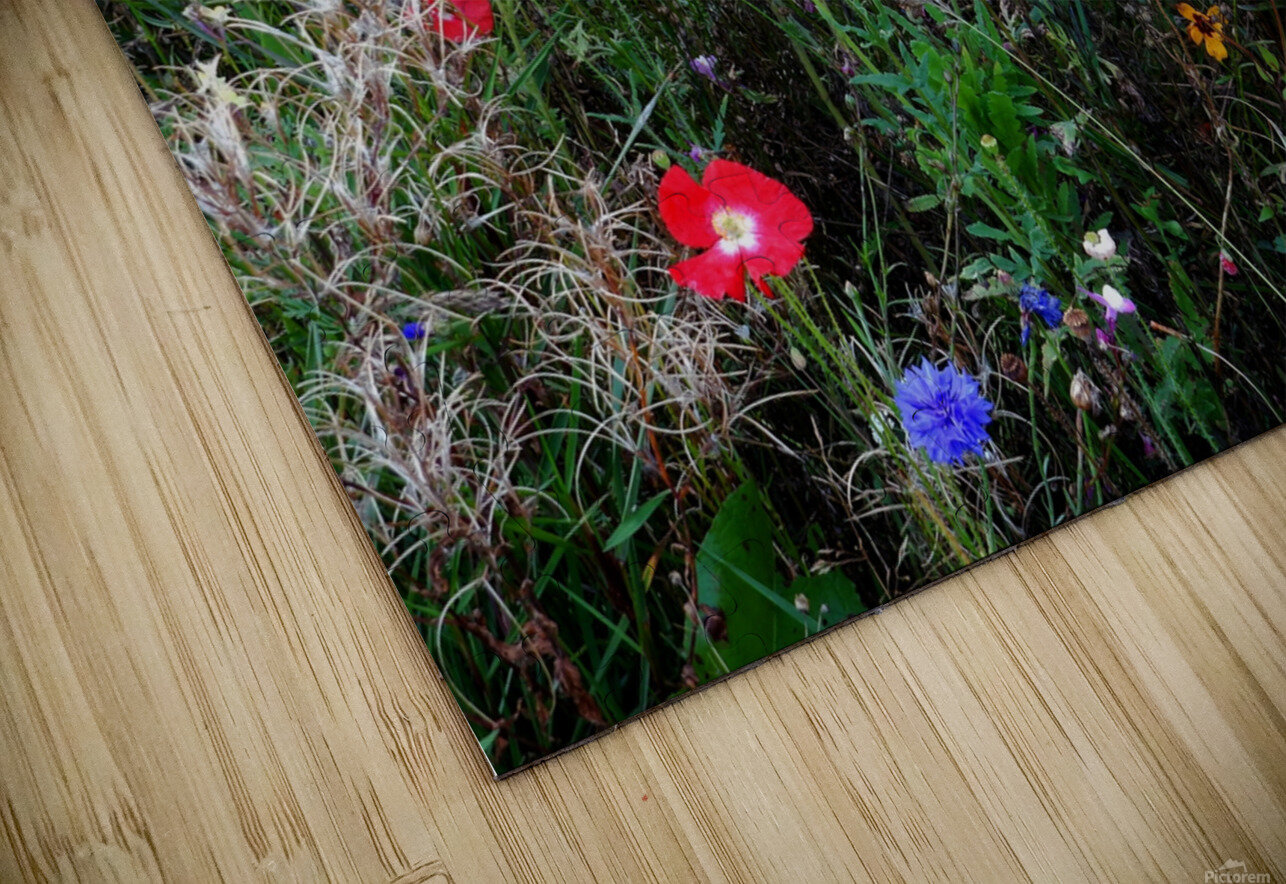English Cottage Garden Flowers 2 HD Sublimation Metal print