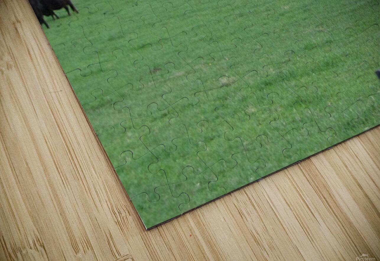 Cows Lullaby Impression de sublimation métal HD