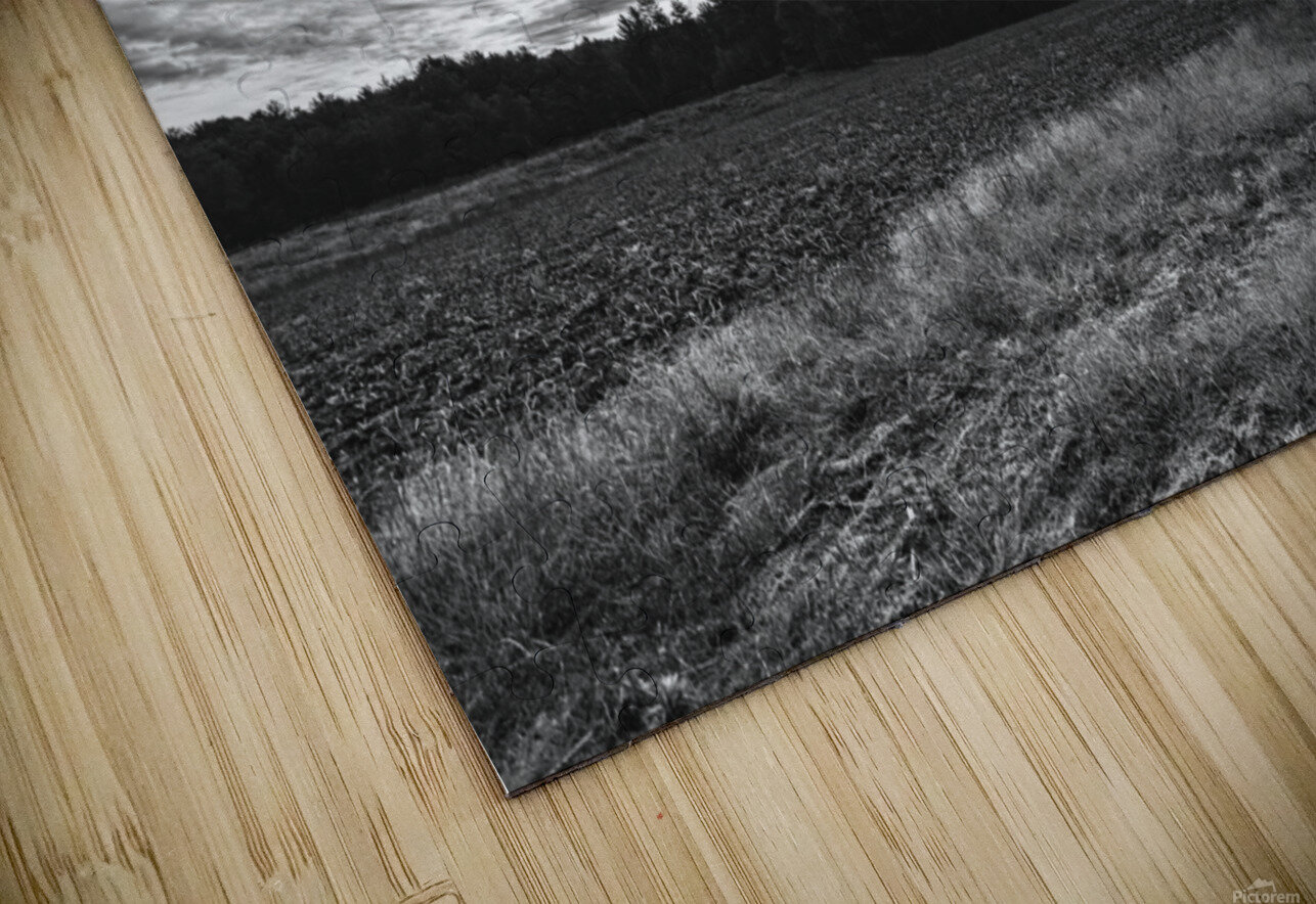 After The Harvest HD Sublimation Metal print