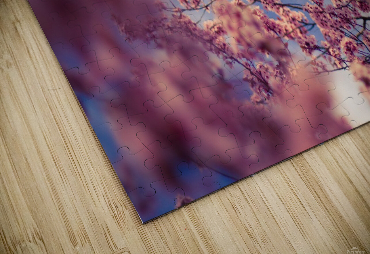 Spring cherry flowers HD Sublimation Metal print