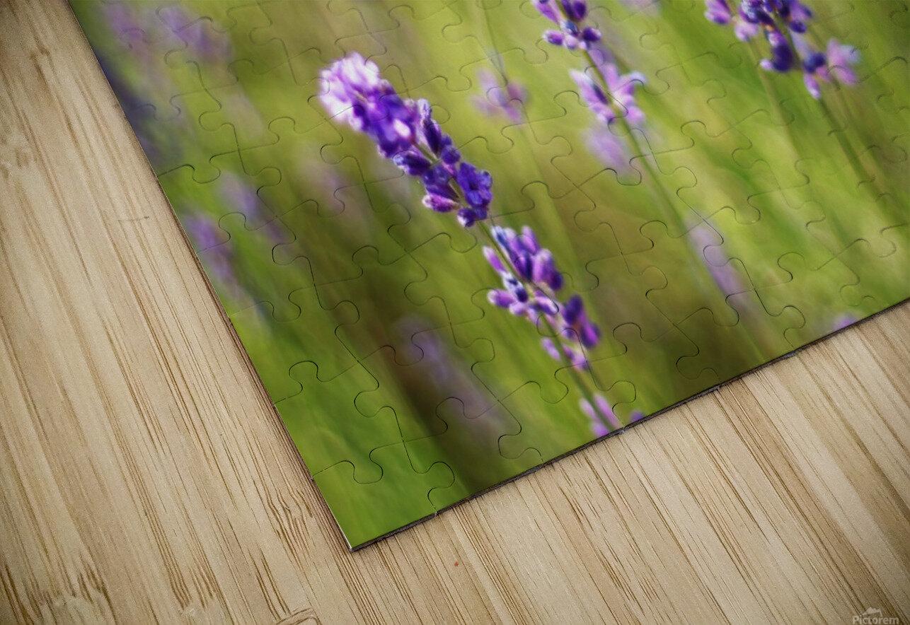 Lavender flowers HD Sublimation Metal print