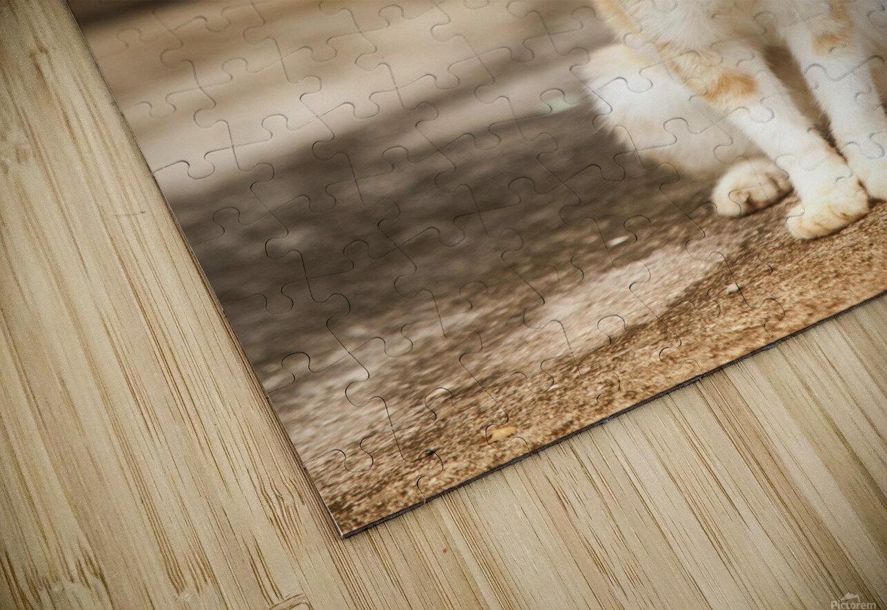 IMG_1320 HD Sublimation Metal print
