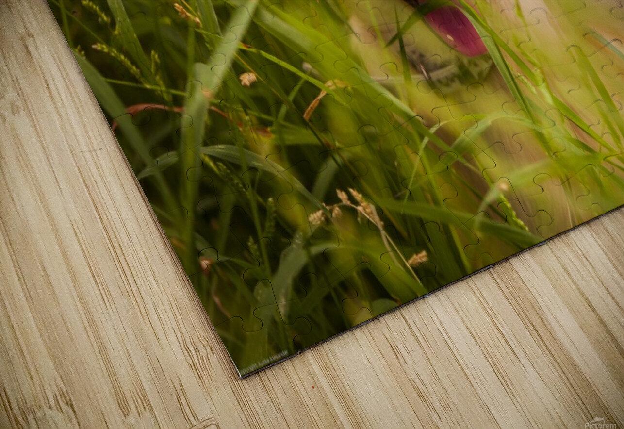 IMG_1411 2 HD Sublimation Metal print